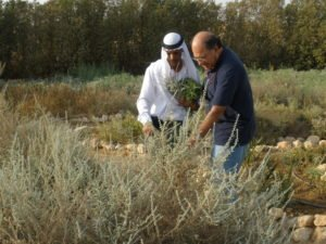 Michael Ben Eli with Ali Alhwashla, the Director of the Medicinal Plants Initiative at Project Wadi Attir, a Sustainability Labs initiative with the Bedouin community in the Negev desert to develop sustainable desert agriculture.